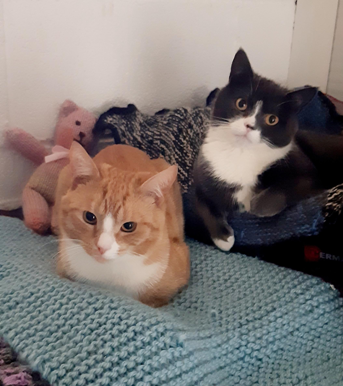 Timmy & Sprinkles